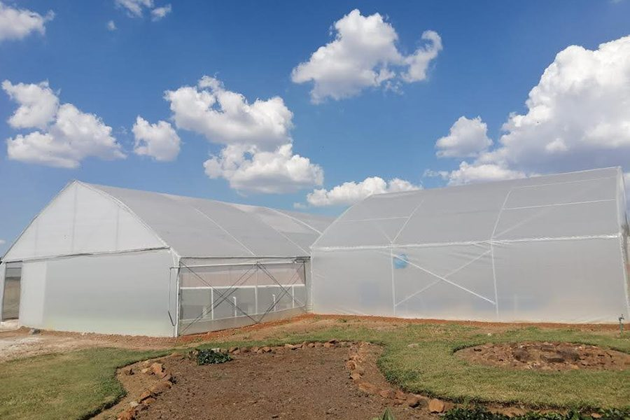 INMED greenhouse